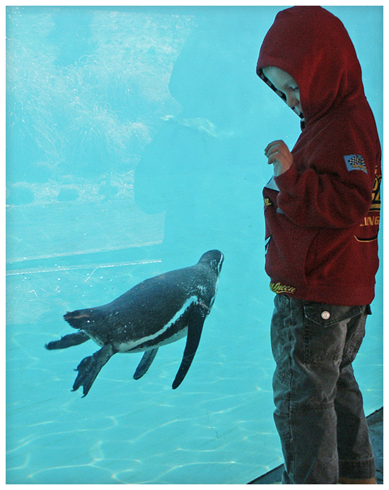 Child And Penguin