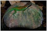 Lizard 8