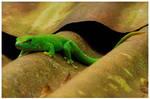 Lizard 9
