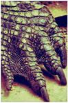 Crocodile's Leg