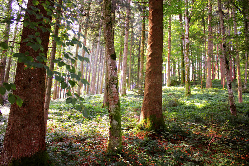 Free Nature Stock Photos Free Enchanted Forest Stock by