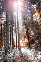 Free Enchanted Forest Stock by Aelathen
