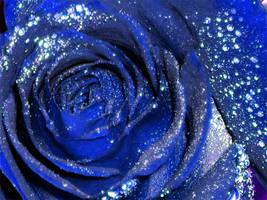Blue rose by LittlelittleDoll