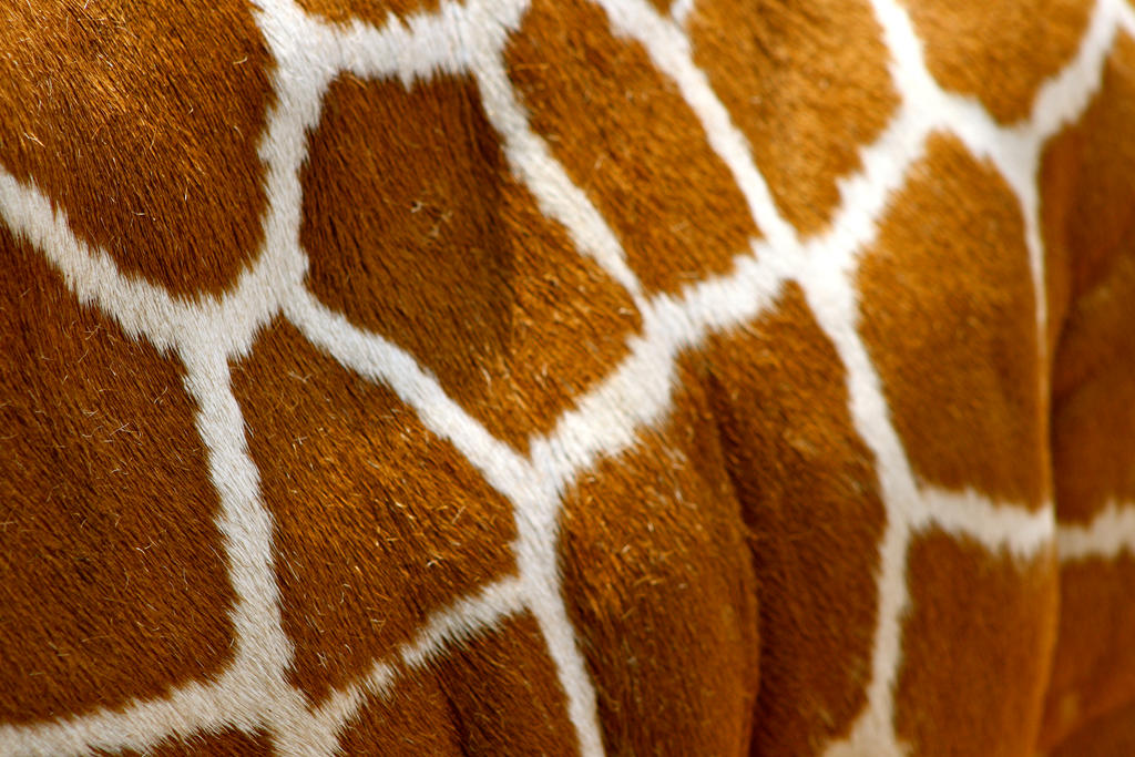 animal skin patterns giraffe - photo #17