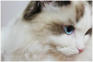 Baby Blue Eyes by AraDolls