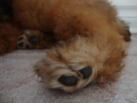 Fuzzy Paws