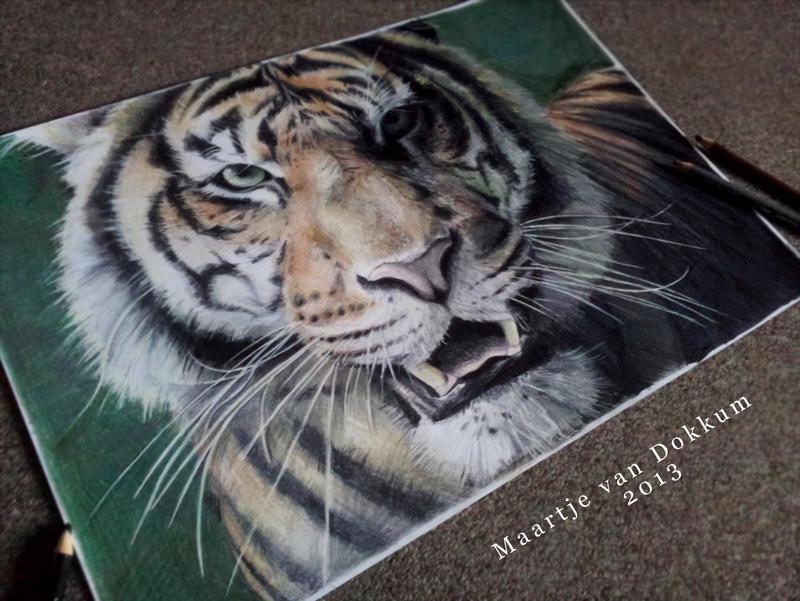 Tiger by MCVD
