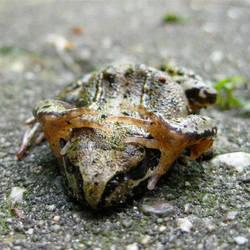 Froggie Tale I