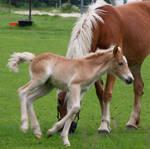 Happy Foal II