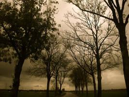 Autumn Trees I by webworm
