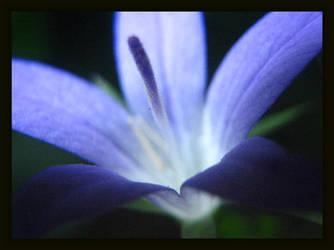 Blue by webworm