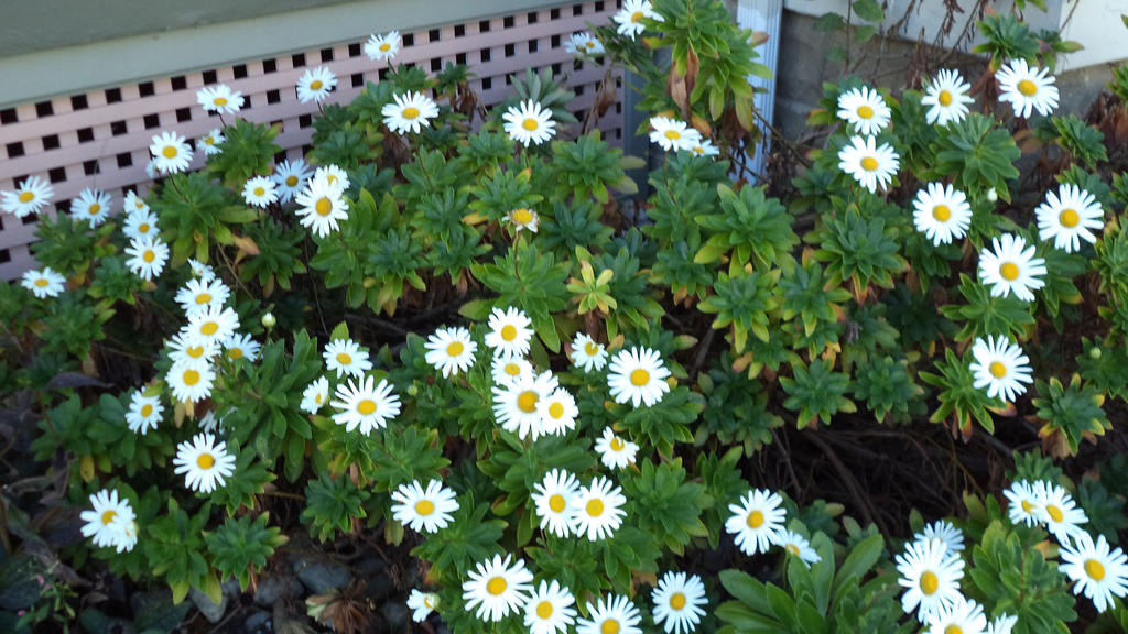 Daisy Garden by BabyFaceCrossbones