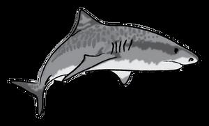 Shark Week 2012 Day 3
