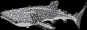 Shark Week 2012 Day 5