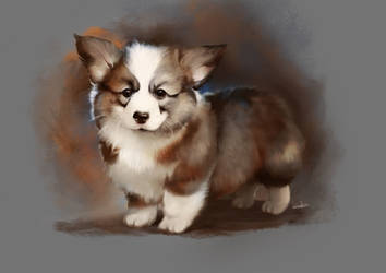Corgi puppy by Momentho