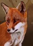 Fox Portrait by petanimalia