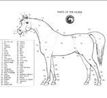 Arabian Horse Anatomy (NOT MINE!!!) by VersaFarm