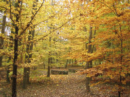 Autumn Bridge IV by simfonic