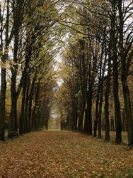 Autumn Trails II by simfonic