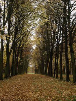 Autumn Trails II