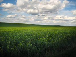 Field of Buttercups II by simfonic