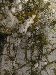 Mossy Marble Texture