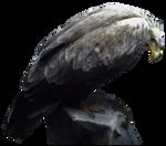 Angry Bird PNG