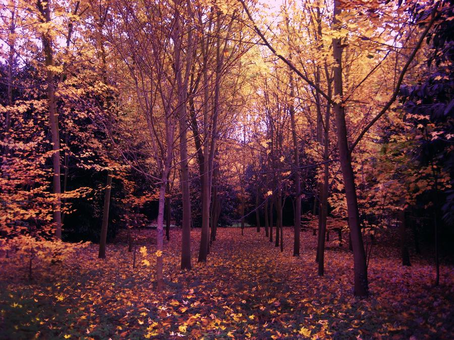 Purple Autumn by simfonic