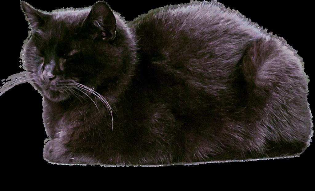 Sleeping Black Cat PNG by simfonic on DeviantArt
