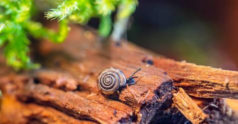 Macro Snail by simfonic