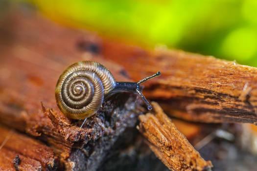 Snaily
