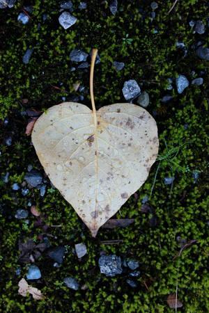 Nature's Heart by AliceDArte