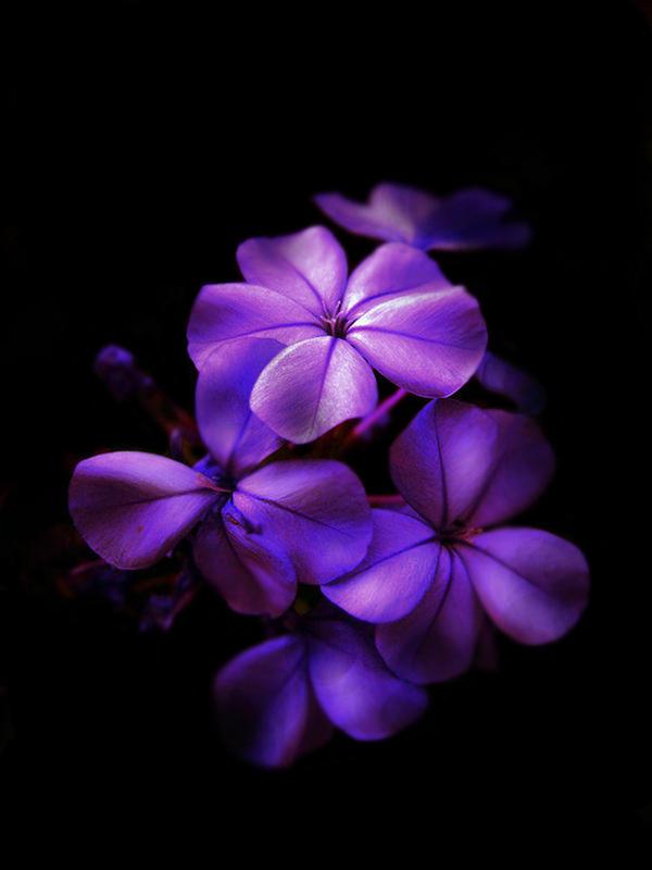 purple flowers by RussianSweetheart