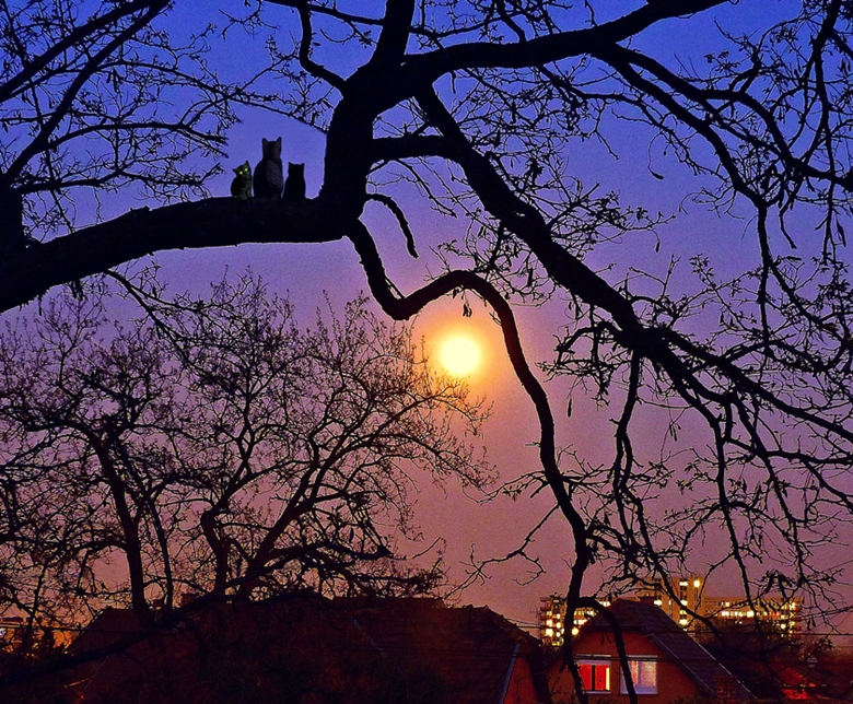Full moon in suburban.. by vekeslasz