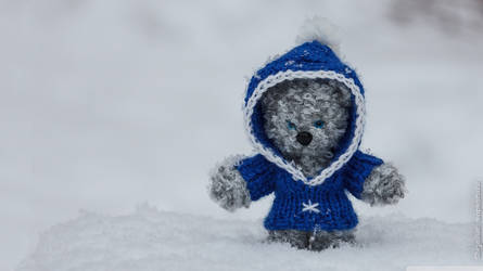 Wallpapers || Bear in the snow  BY: TFL