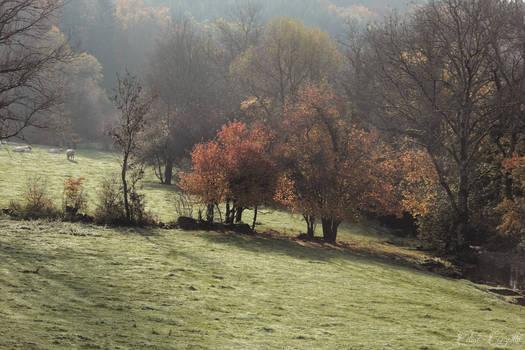 Countryside breath