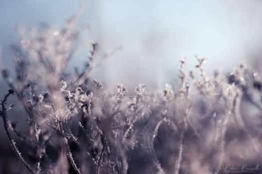Gems of Winter