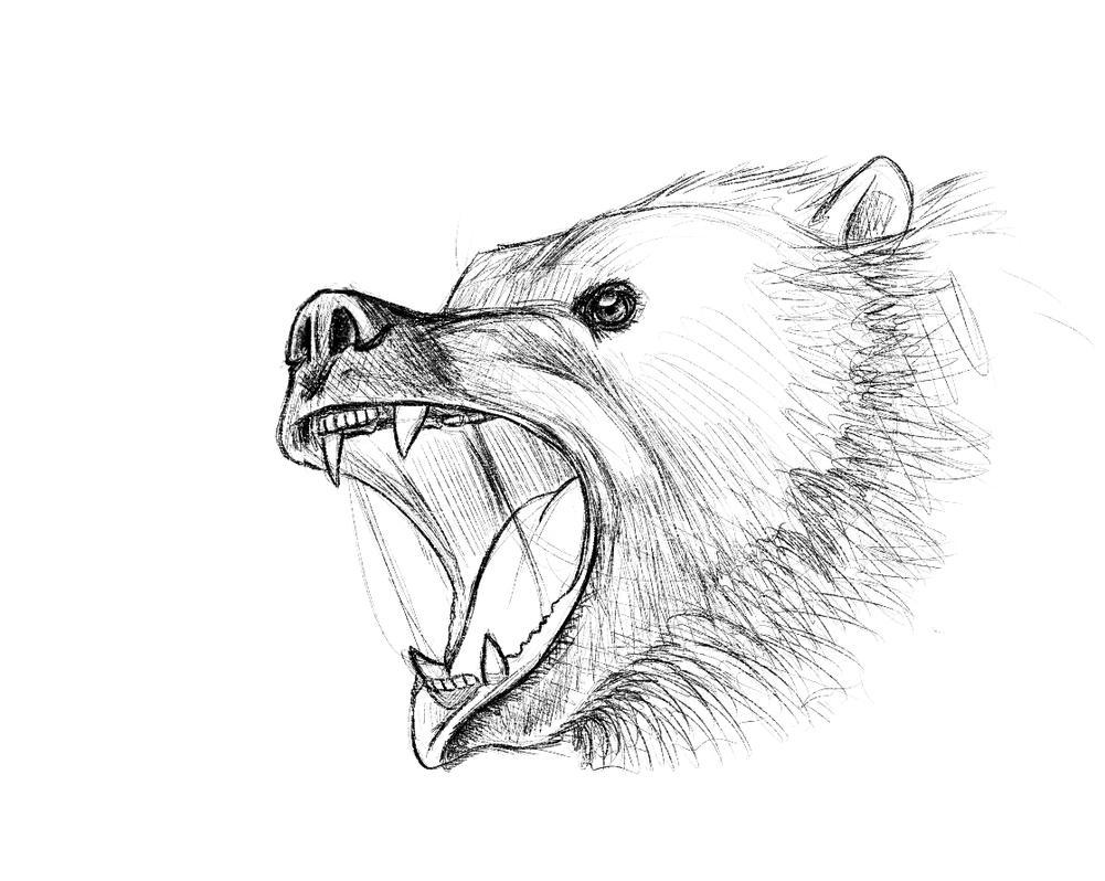 Angry bear head drawing - photo#3
