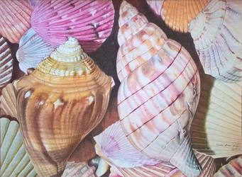 Lapisdcor-conchas by elianalara