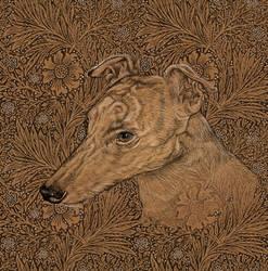 Yumi the greyhound on Morris marigolds