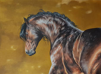 Bay Andalusian by Tenrou-RT