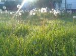 Neighbor's Weeds