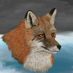 Red Fox HS 1 by furocious-studios