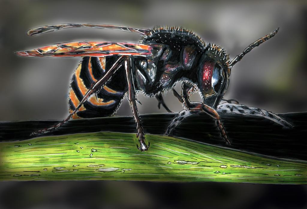 Hornet2 V2 by Natah1