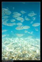 Underwater by Snapshooter