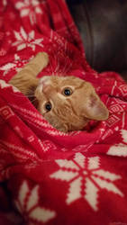 Christmas kitten by masonmouse