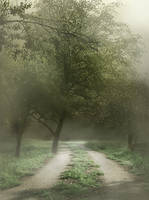 Fog backgrounds by moonchild-lj-stock