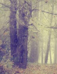 Misty Wood 1