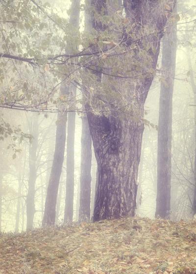 Misty Wood 2 by moonchild-lj-stock