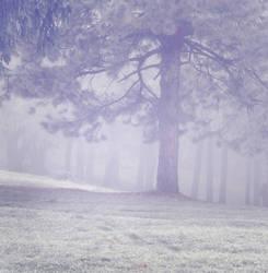 Misty Wood 3